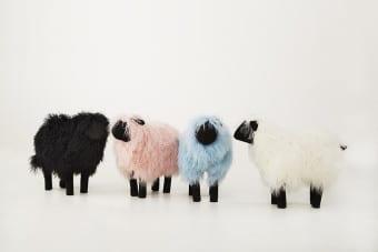 Lambskin Sheep